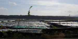 除染土の袋たち