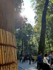 参道の大木