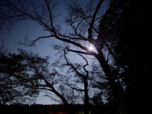神社から眺めた月