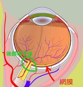 眼の構造図