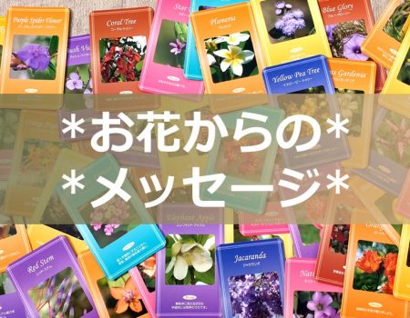 FeelFreeフラワーエッセンス「お花からのメッセージ」